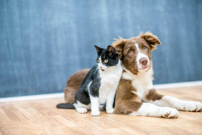Keeping Pets is Cruel by Diya Manoj, Newstead Wood