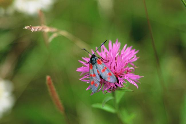 Gardeners are being encouraged to let weeds and wildflowers bloom for International Biodiversity Day