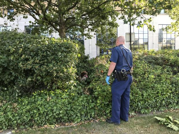 News Shopper: A police sniffer dog with its handler searching bushes outside the Holiday Inn on Bugsby's Way, Greenwich, London, where a woman has died after being stabbed.Luke Powell/PA Wire