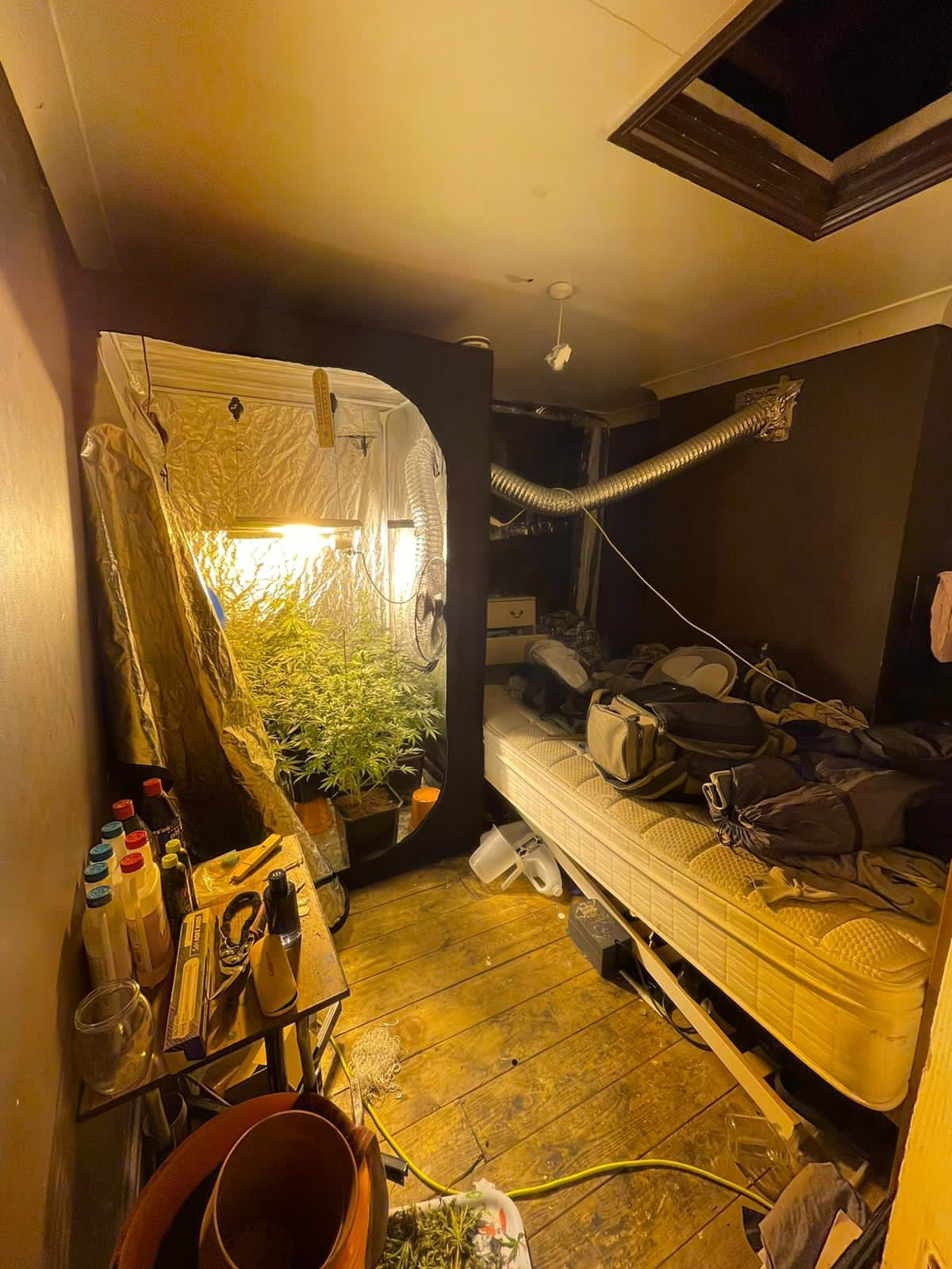 Cannabis grown inside a property on the Greenwich Peninsula