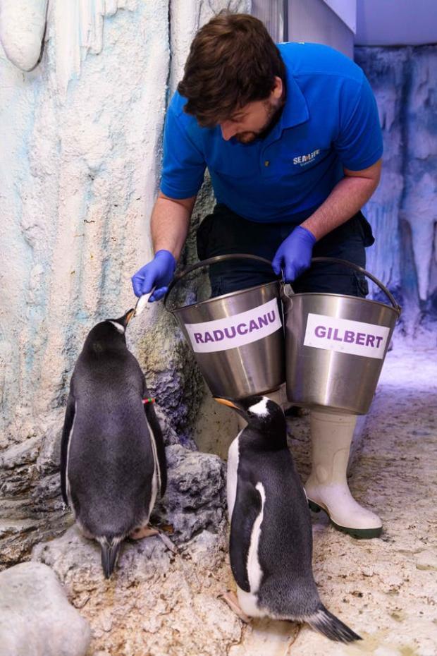 News Shopper: Gentoo penguin chicks named after Emma Raducanu and Professor Dame Sarah Gilbert (PA)