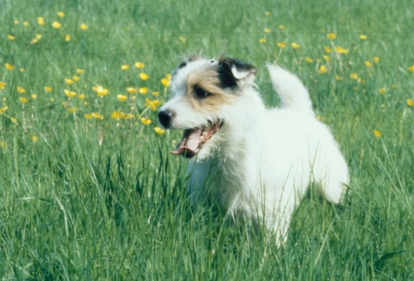 News Shopper: Jack Russell  Max, 16, missing since Feb 12 from Eltham Park South