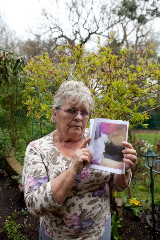 "Pensioner calling for law change after ""out of control"" dog kills kitten"