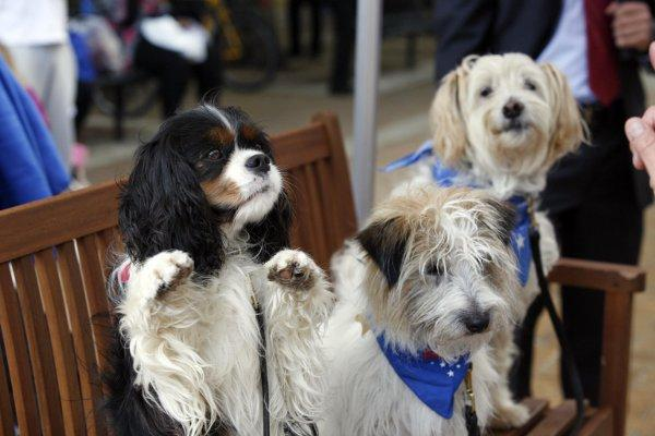 Dogs to vote in Metro Bank biscuit challenge