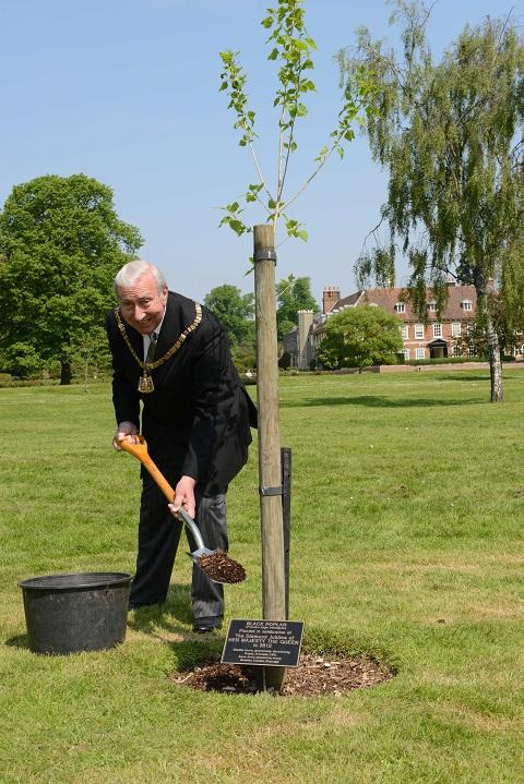 Hall Place plants one of Britain's rarest trees in a very green celebration of the Diamond Jubilee