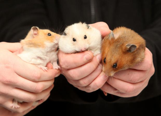 News Shopper: Hamster that were dumped in a bin