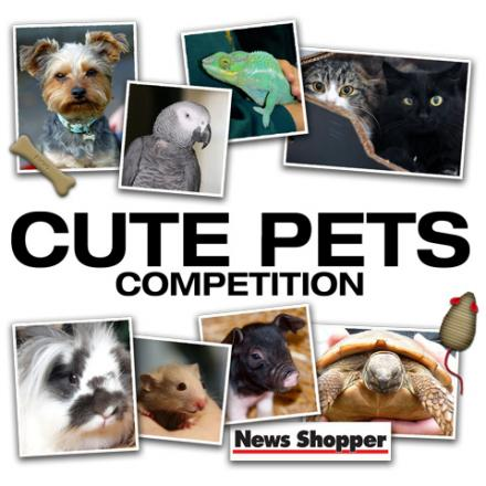 Voting in News Shopper's cute pets photo competition is under way
