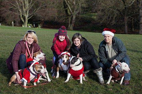 Rescued Bull Terriers take a walk in festive fancy dress around Shooters Hill