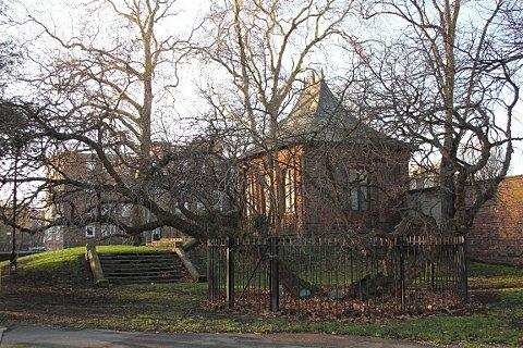 News Shopper: Ancient Mulberry tree in Charlton Park, picture courtesy of Carol Kenna