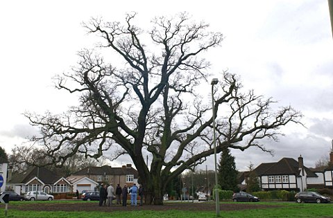 Bromley's ancient trees given new lease of life