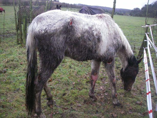 This horse had to be put down after being found covered in flesh wounds in Swanley.