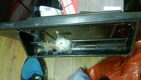 Bromley man is given recycling box full of dead spiders
