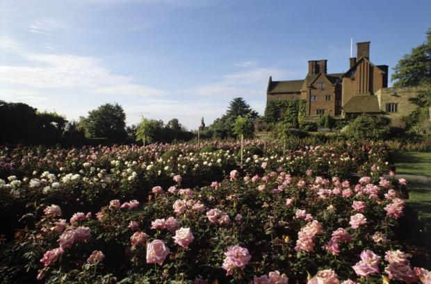 Rose growing tips from a National Trust gardening expert