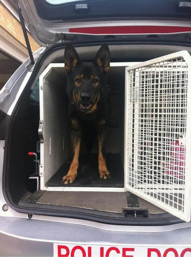 News Shopper: Lewisham police dog Sampson