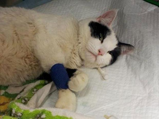News Shopper: Cat brought back from dead by firefighters during house blaze recovers in Lewisham