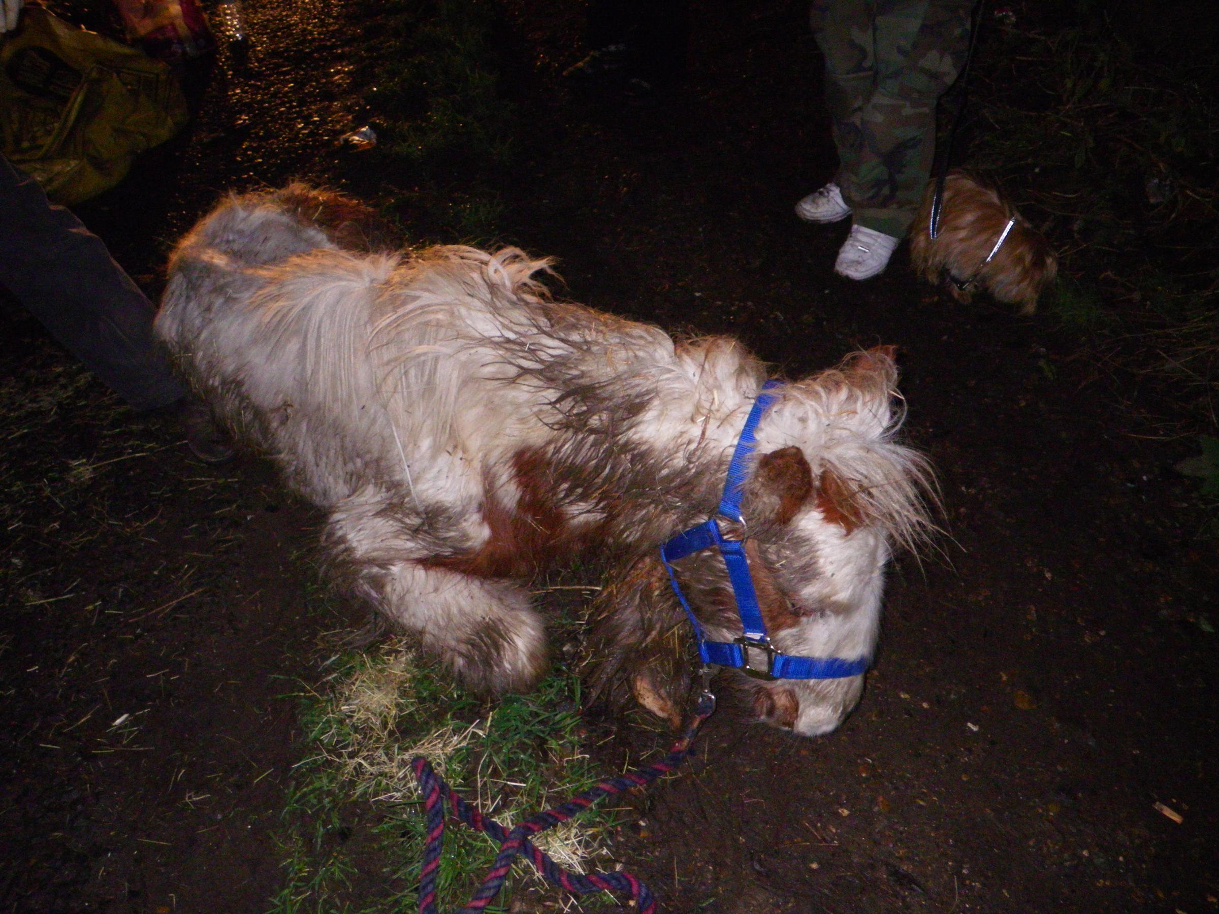 'Heartless' acts see two horses left to die in Belvedere in same week