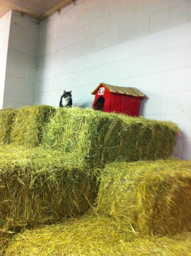 News Shopper: George the stable cat