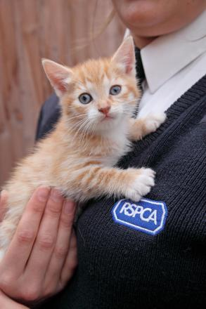 Animals can be micro chipped for free on Sunday - photo RSPCA