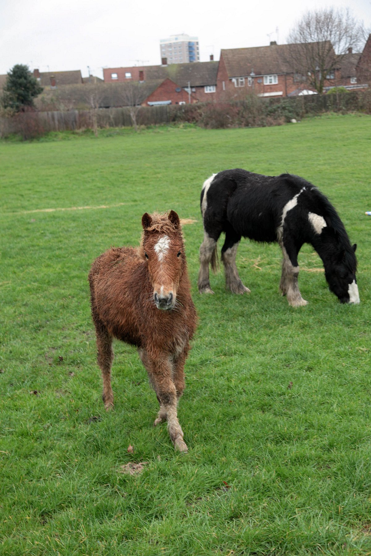 RSPCA lambasts 'horse crisis' following concerned calls about Slade Green animals