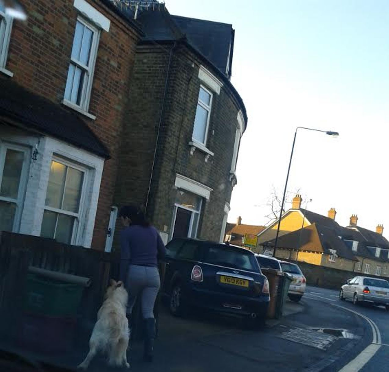 PICTURED: Golden retriever on the loose in Bexley village
