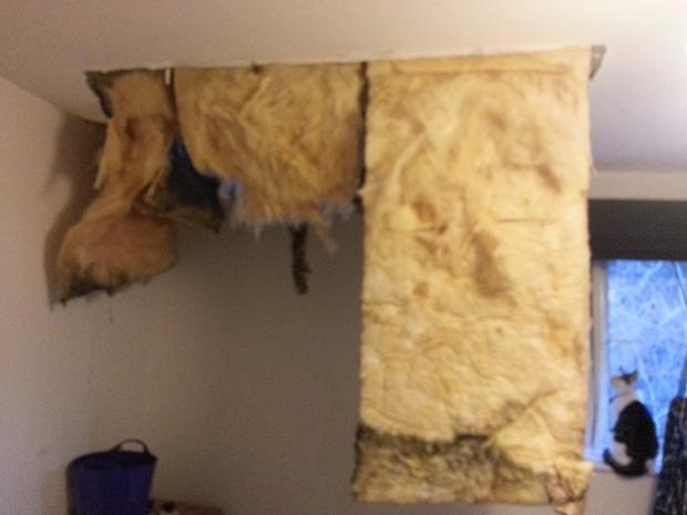 News Shopper: Rachael Collins' bedroom ceiling collapsed after a 60 foot Poplar tree hit her house