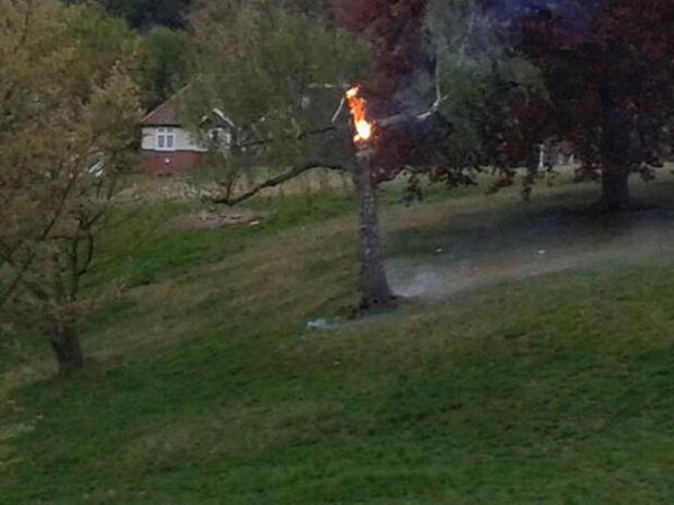 News Shopper: The tree on fire in Greenwich Park, picture courtesy of @Inside_Property