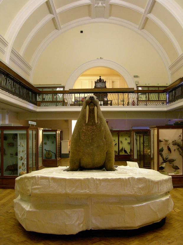 News Shopper: The walrus in the Horniman Museum and Garden Natural History Collection