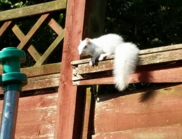 An albino squirrel in Bromley. Photo by Sevcan Ankay Vadeoglu