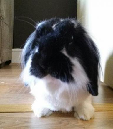 Vinnymoo the rabbit is Pet of the Day