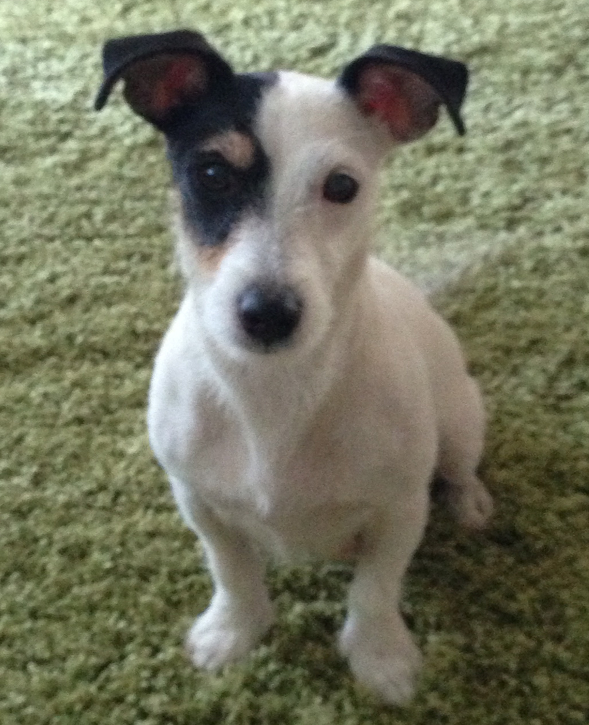 News Shopper: Luna is Pet of the Day