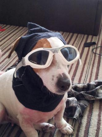 Pet of the Day: Patch is loveable even in disguise