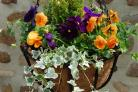WIN! An hanging basket bundle worth £90 for your garden this summer