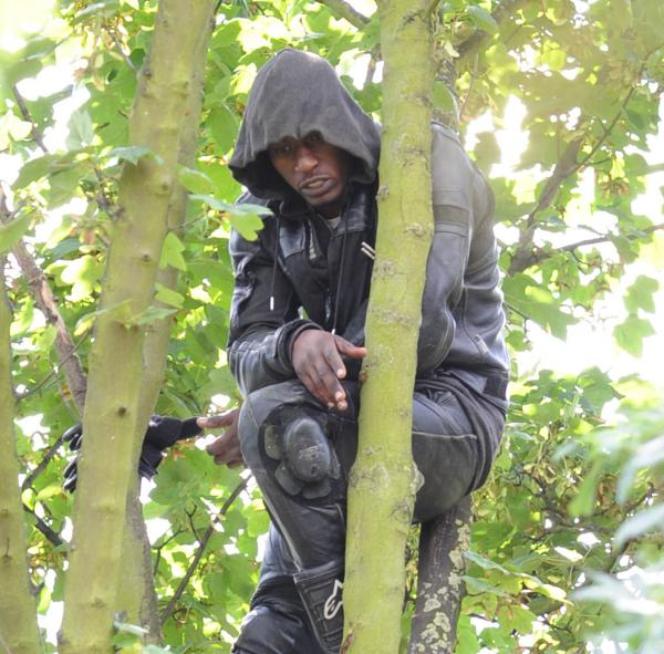 UPDATE: Charlton burglary suspect arrested after 17-hour tree stand-off causes Southeastern chaos
