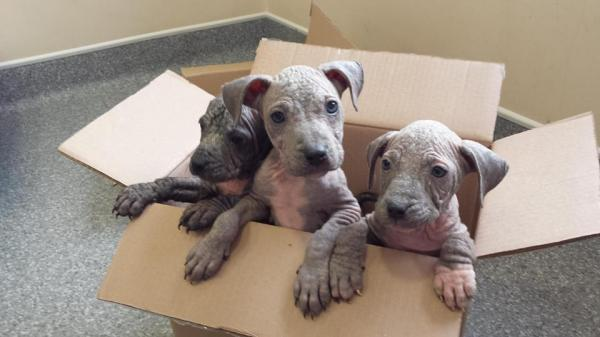The puppies were found abandoned in a box this morning (September 3)