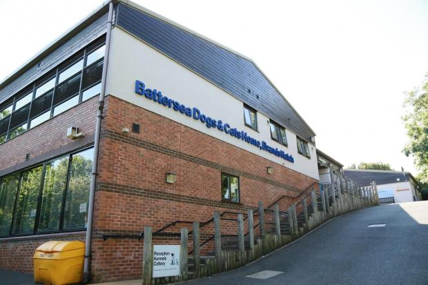 Jobs At Battersea Dogs Home Brands Hatch