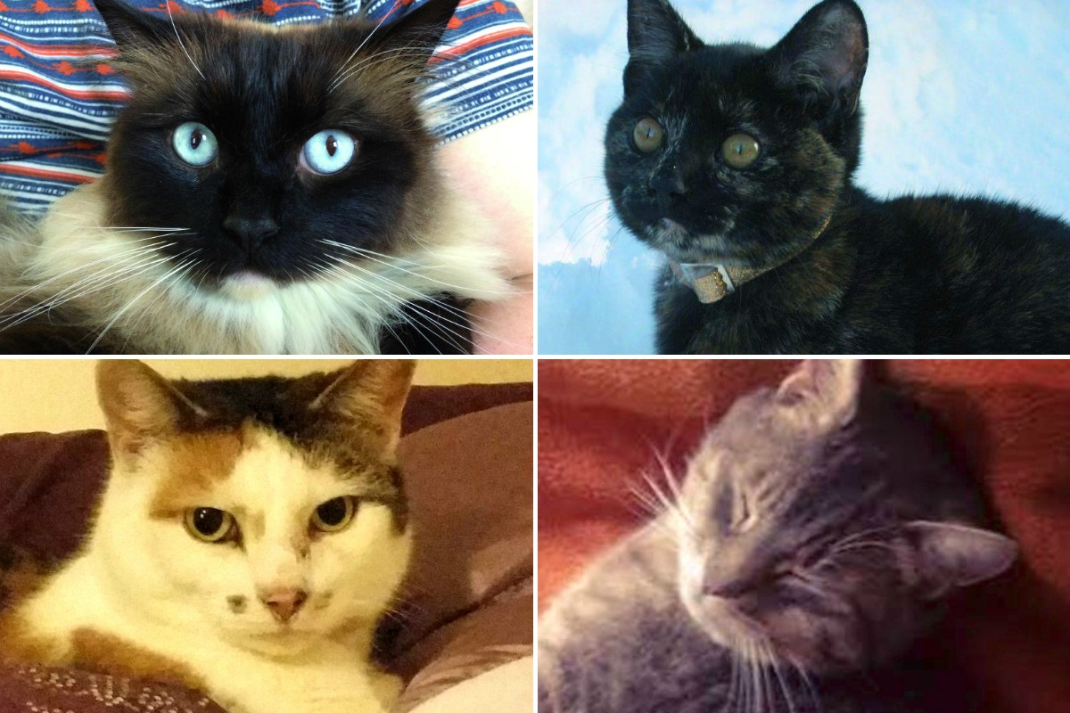 Some of the victims of the so-called cat killer.