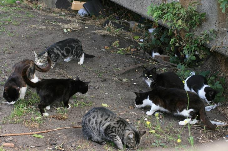 031cf6330b7df3 Help us  Cat sanctuary makes desperate appeal so it can continue saving  animals