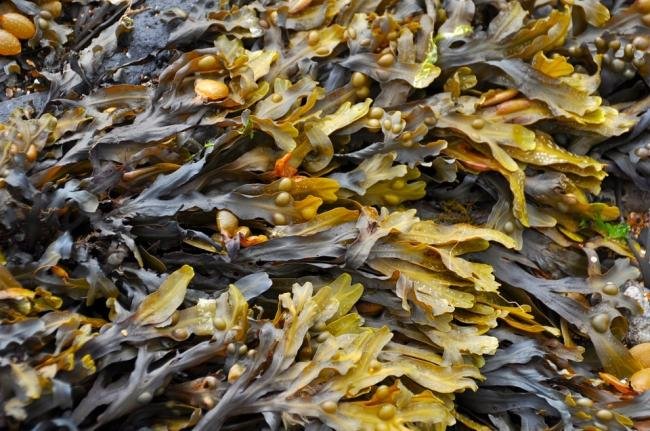 Seaweed - The Key To Tackling Climate Change?