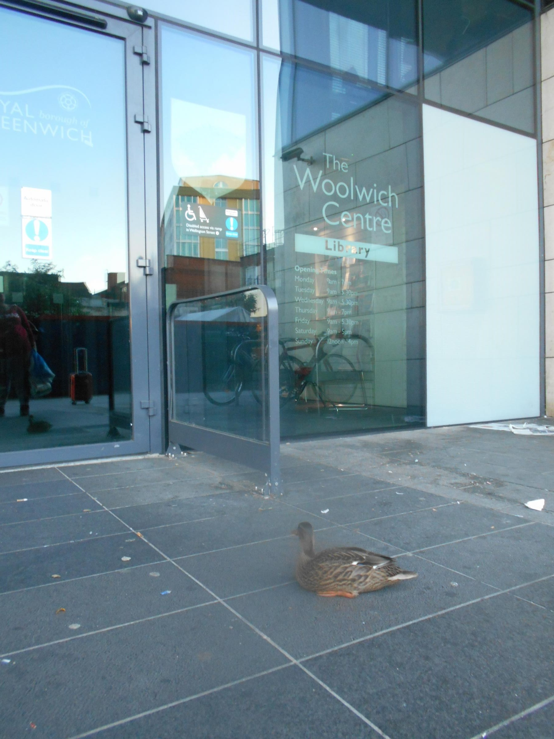 Even the ducks want to visit Woolwich Library