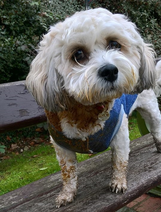 Daisy the dog was covered in human poo