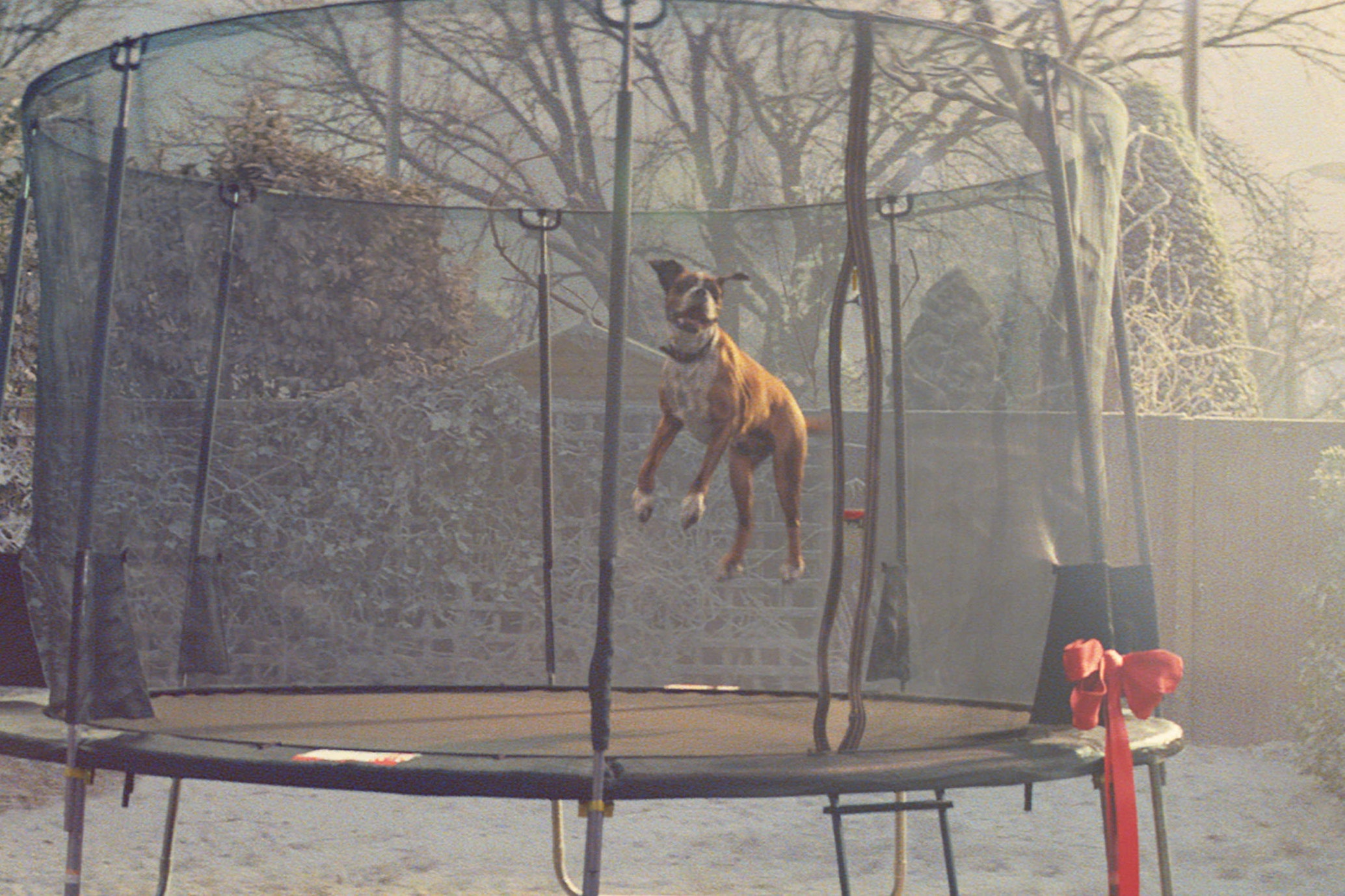 Buster the dog enjoyed a new trampoline last Christmas (John Lewis/PA)