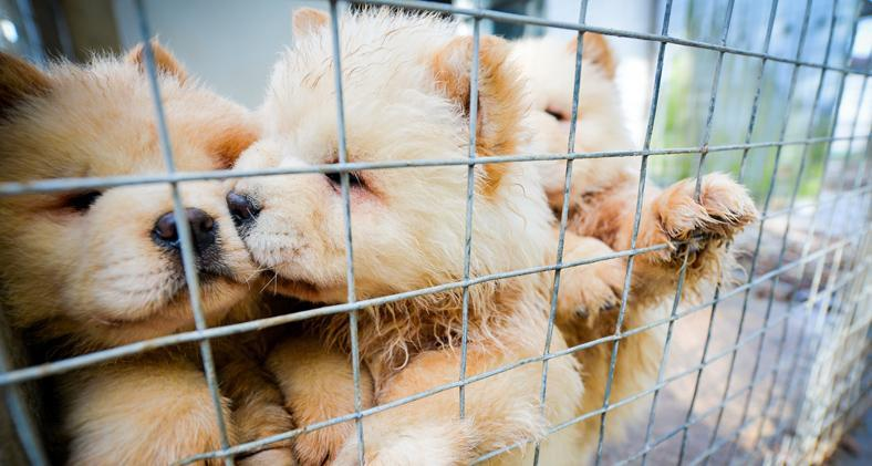 Dogs Trust is claiming that Kent is a smuggling hotspot