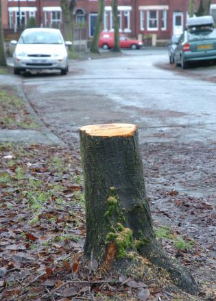 More Bromley trees felled than planted