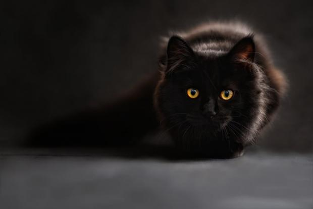 News Shopper: Black cats are said to be unlucky.