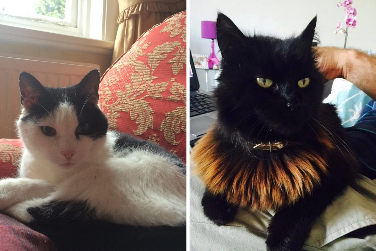 Spike (left) and Harriet (right) were both killed and found by their owners