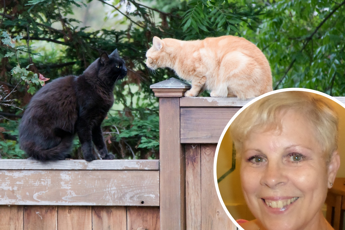 Get ready for turf wars among cats, says Pauline Dewberry