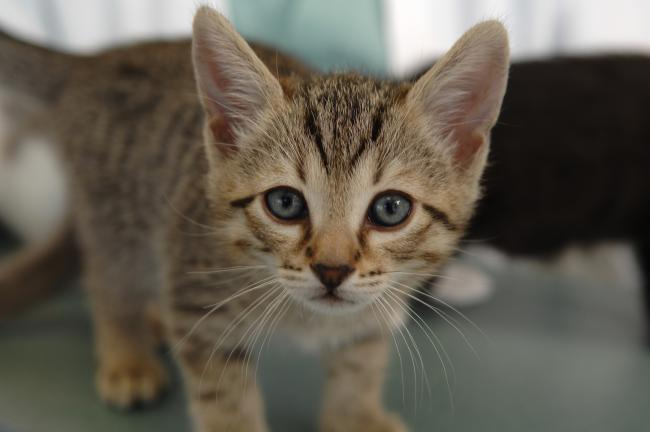 Cat care column: Why neutering your pets is so important | News Shopper