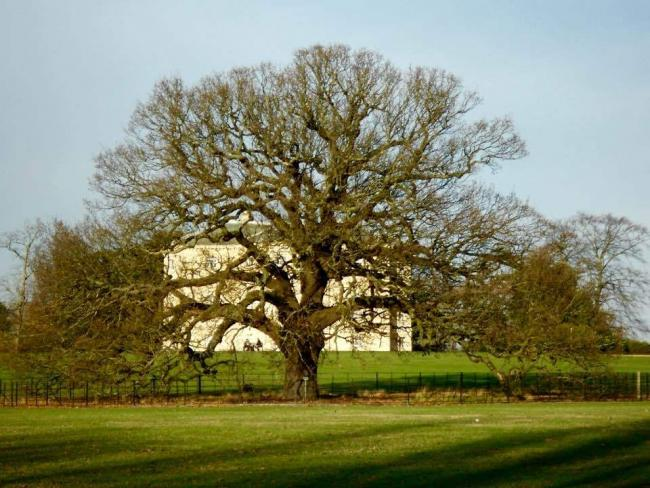 The Bexley charter oak in Danson Park. Photo by Sandy Hunt via News Shopper Camera Club