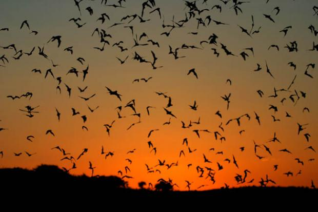 News Shopper: WOODFORD GRN: Go batty for bats
